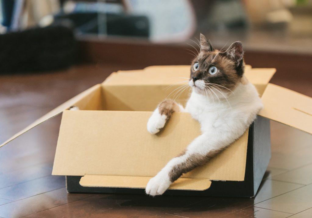 段ボールに入った猫画像